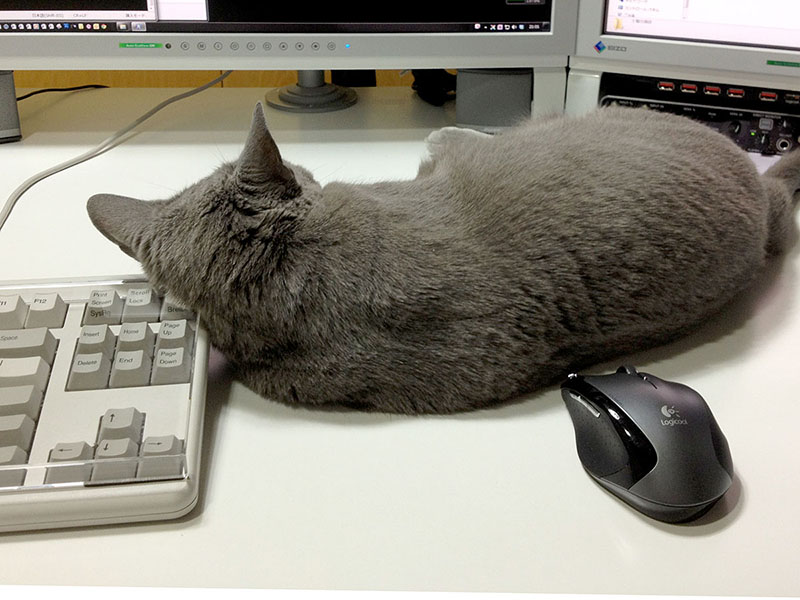 あっ、でも、今度は猫が背中でマウスを誤操作しそう……