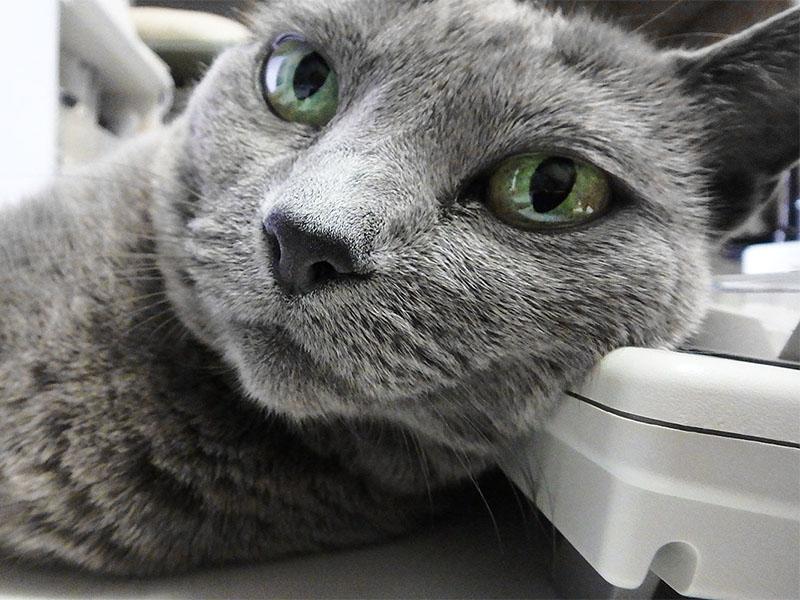 まあそういうときは、猫写真など撮りつつ、ノンビリ過ごすことにしましょう~♪