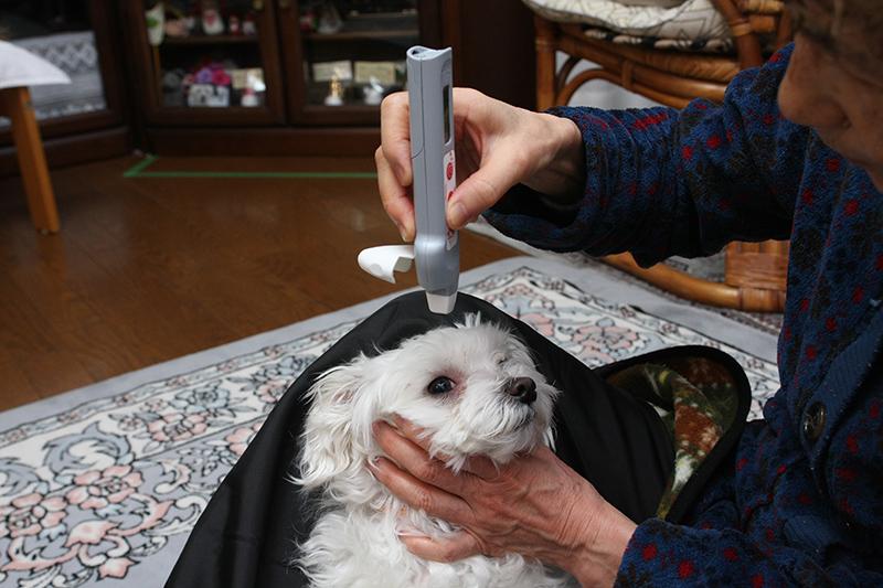 ペン先を瞳に向けて体温を測る。非接触なので、さほど怖がらないし、あっという間に測れるのでご主人にもペットにもやさしい体温計