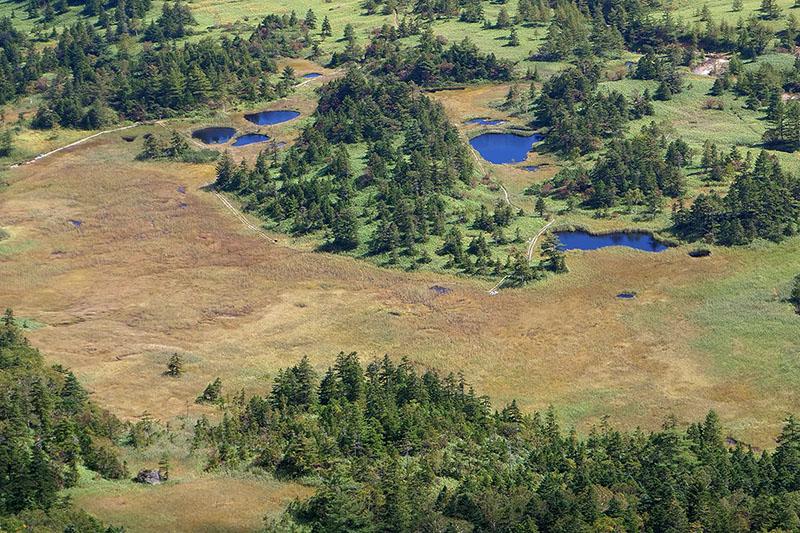 芳ヶ平湿地群です
