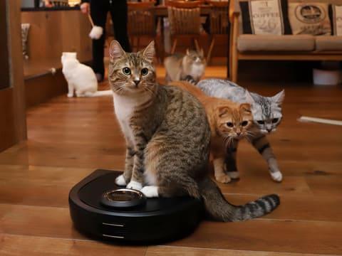 ネイトのロボット掃除機を猫カフェに導入。猫の遊び道具としても ロボット掃除機「Botvac D5 Connected」を猫カフェに試験導入