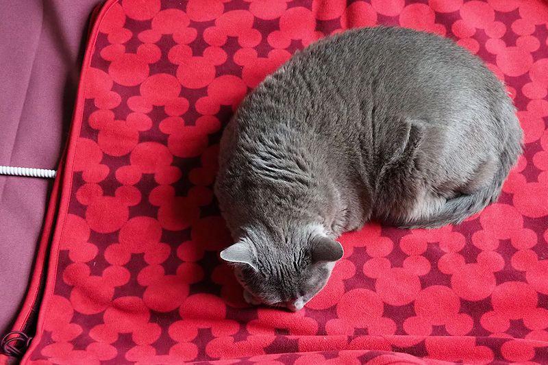 そしてすぐに寝ました。やっぱり猫は暖かいのが好きなんですね~