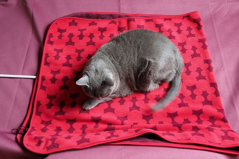 ヒーターの上に毛布を敷いています。その上で寝ているのは「うか」