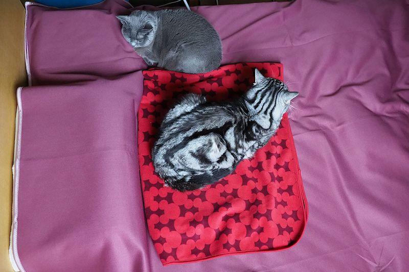 ヒーターがあると、拙宅猫がツーショットで居ることが多いような気がします