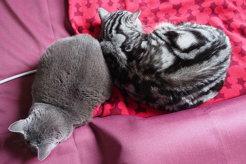 しばらくすると、猫たちは体を寄せて寝ていました