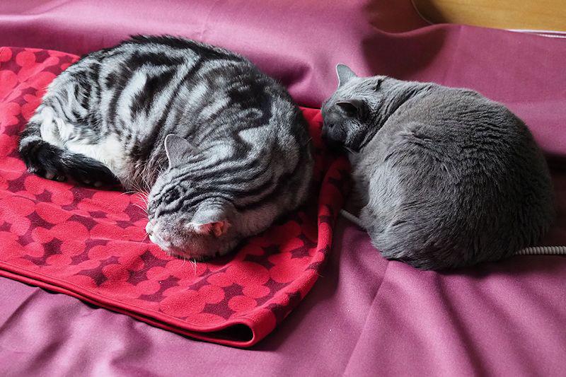 寒い季節の猫の昼寝、のどかでイイですね~♪
