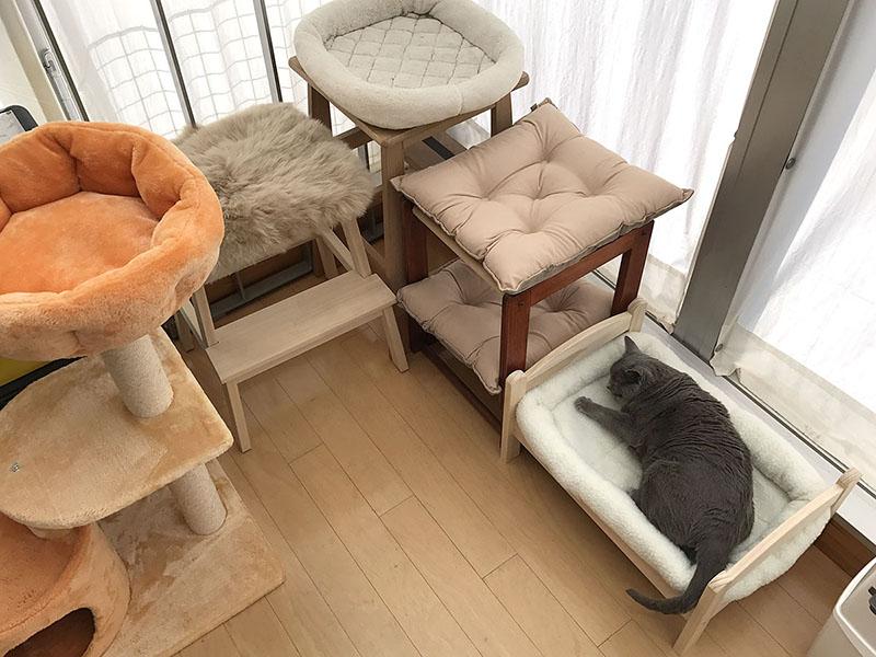 人形用ベッド設置から4日後、あっ猫! 「うか」が寝ていたのでした♪