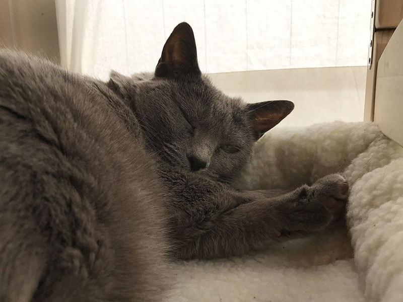 また、ナゼか「うか」は向こうに頭を、手前にお尻をという向きで寝ます。謎