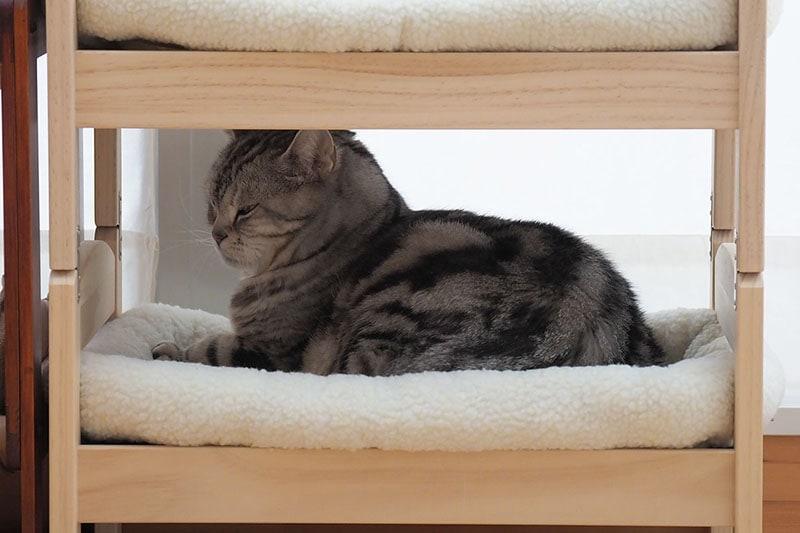 拙宅猫「とろ」も1段目に座ったりします