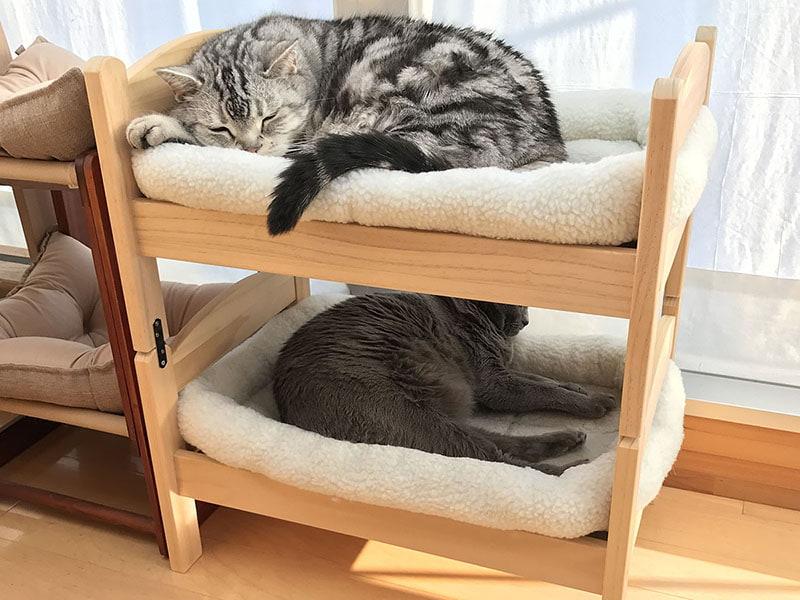 「とろ」と「うか」、定位置で昼寝。飼い主としては、とてもホッとする光景です♪