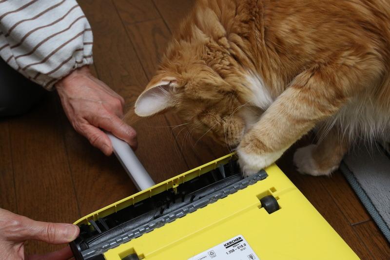 ひっくり返すと、回転式のブラシ! 手前のグレーの部分がチリトリのエッジの働きをして、回転するブラシがどんどんゴミをかき込むのだ! ウチの猫も、そのローテクさにびっくりニャ!