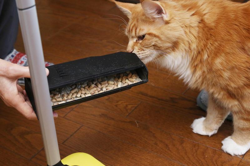 僕が汚した猫砂がこんなに取れてるニャン!