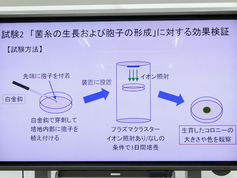 「菌糸の成長・胞子の形成」段階の検証方法