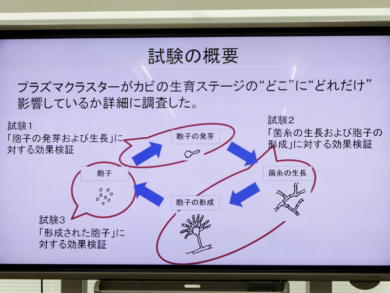 カビの生育ステージ「胞子の発芽・生長」「菌糸の成長・胞子の形成」「胞子」の3段階