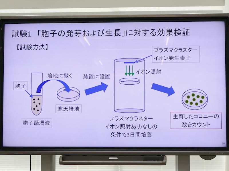 「胞子の発芽・生長」段階の検証方法