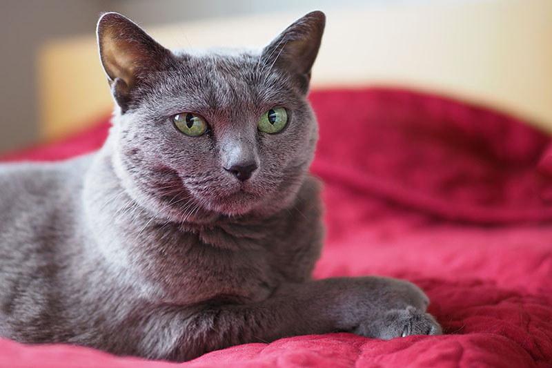 ちょっと体重が増えて関節炎っぽい症状が出た拙宅猫「うか」。関節に良さそうなサプリメントを与えることにしましたが、錠が大きいので砕く必要があります