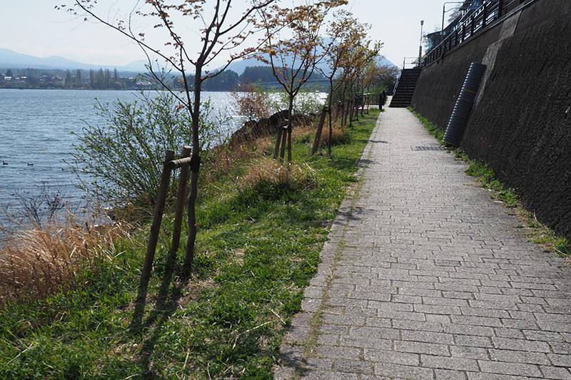 河口湖周囲の道。山中湖ほどは整備されていないので、走りにくい場所や走れない場所もあります