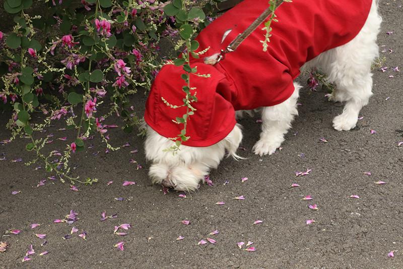 巡回ルートの草木の中の探索でも、レインコートが小枝に引っかかることもなく、また引っかかってもぜんぜん破れそうな気配もない!