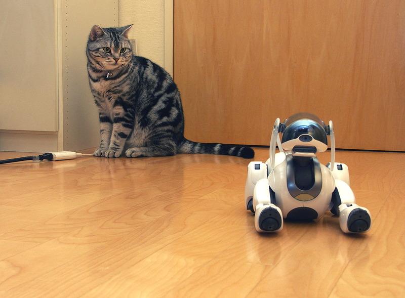 そんな無機質なAIBOに興味を示す拙宅猫「とろ」