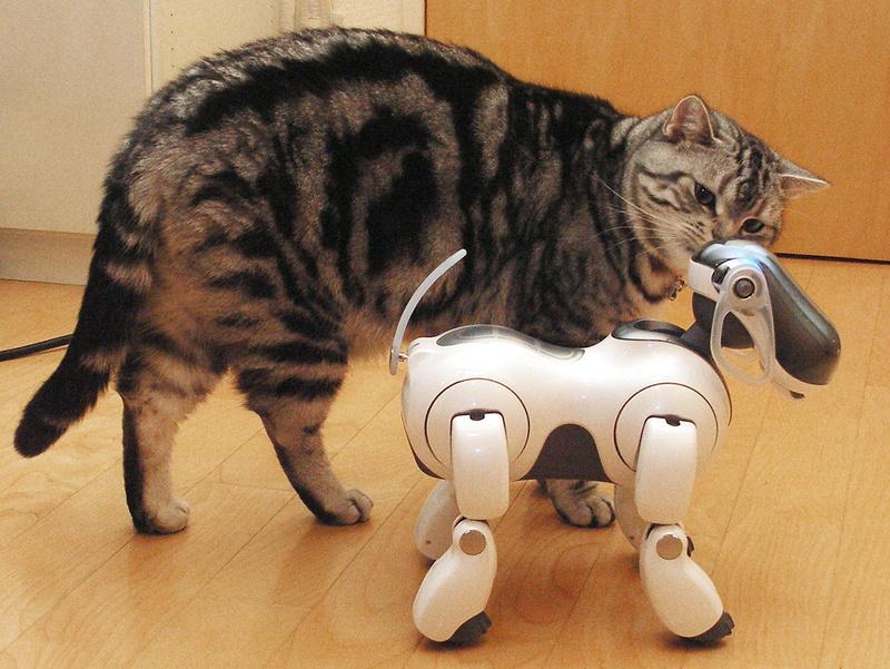 「おまえは、ちょっと好きかも」みたいな? 猫って無機質なロボにでも興味を示すんですね~