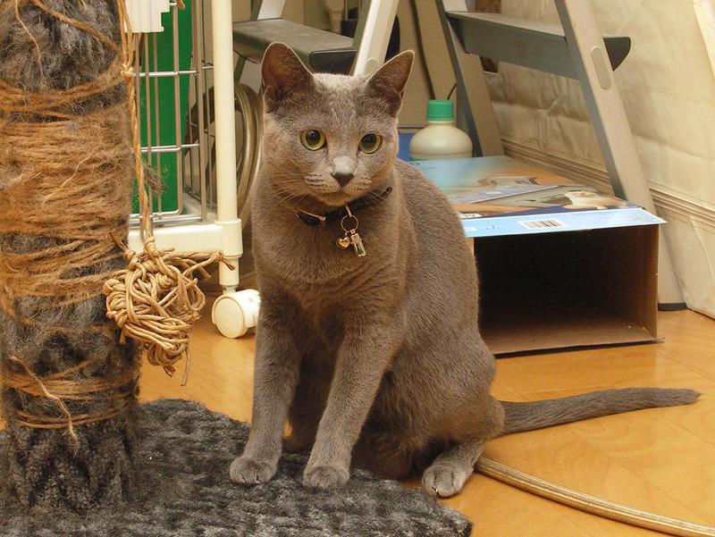 拙宅猫「うか」もAIBOに興味津々。めっちゃ見てます~!