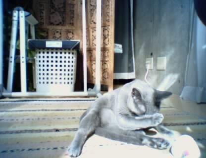 当時のAIBOは毎日「日記」として自ら写真を撮りました。これはAIBOが撮った猫写真