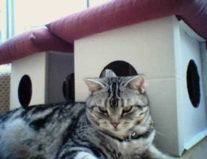 これもAIBO撮影。拙宅猫とAIBOは毎日近くで過ごしていたことがわかります。猫的に、AIBOは仲間だった?