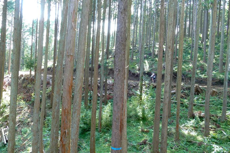 木漏れ日の中を走るのはハイキング気分。速く走ってもゆっくり走っても楽しめます