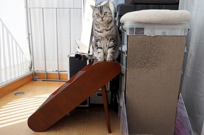 ステップ上に座ってコチラを見てドヤ顔。さすが高いところ好き動物!