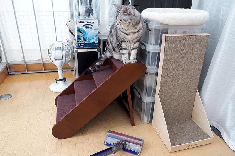 掃除中はココにいて、わりと安心している様子。「高めで安全な場所」は猫にとって重要なのかも、です