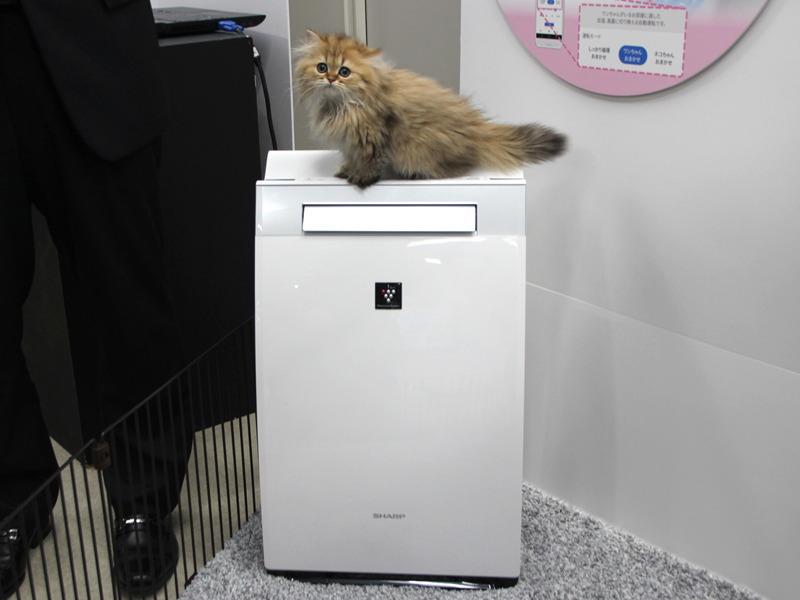 ペット専用運転に対応した「プラズマクラスター加湿空気清浄機」