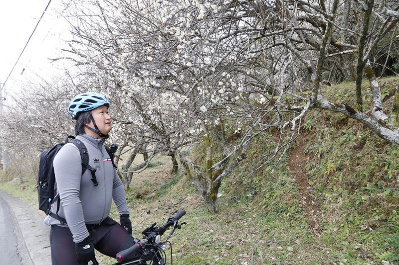 桜を発見したり