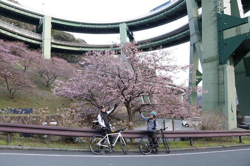 2重ループ橋の下で見つけた桜。e-bikeなら渋滞に巻き込まれず、意外な景色と出合えます