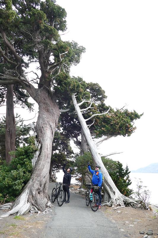 見事な大木