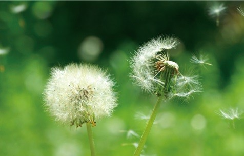 風量「1」はたんぽぽの綿毛が舞うような「ふわり風」を実現