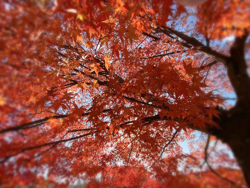 また妄想……山の上の紅葉は真っ赤でキレイなハズ♪
