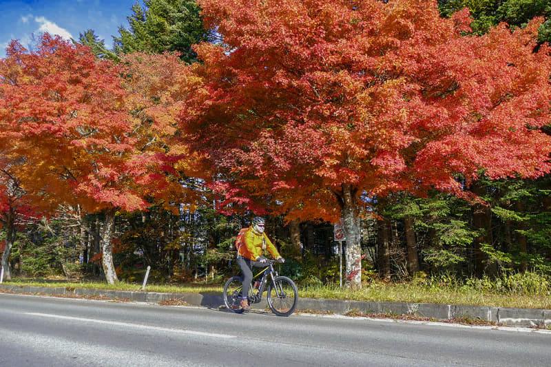 道路沿いにはカエデがたくさん。そしてどれも紅葉中~♪ 澄んだ空気と青い空と紅葉、走り始めて間もないのに、サイコーっ! 軽井沢は自転車でも走りやすく、また、寄り道できるスポットも多々あるのでとても楽しい! またこの季節は、夏ほど混雑しませんのでe-bike観光もスムースです