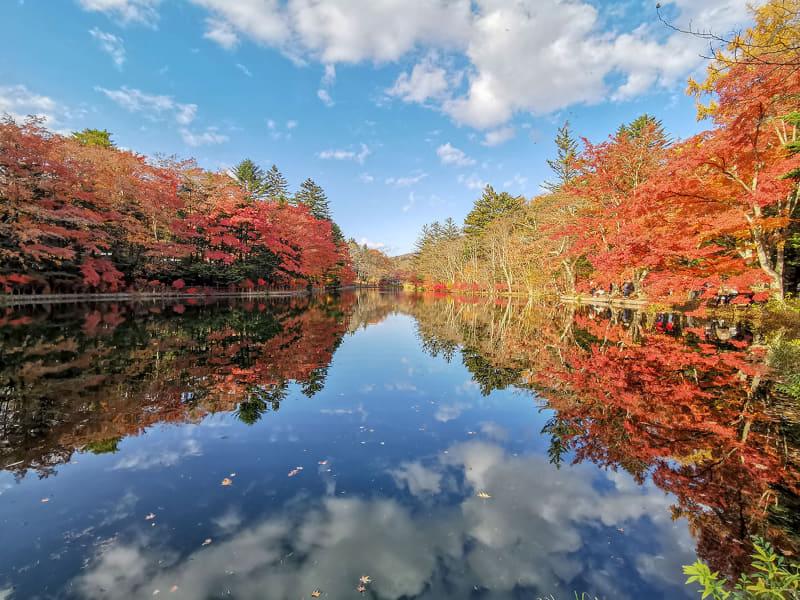 これが雲場池です。湧水を堰き止めた人工湖で、その静水が周囲の風景を鏡のように映す美しさから観光スポットとなっています。というか、これ、この写真凄くないですか? 手持ちのスマホで撮っただけですが、絶景! CGじゃないですヨ!