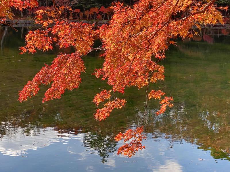 軽井沢の街中を走って紅葉、雲場池でさらなる紅葉。大満足の紅葉狩りとなりました