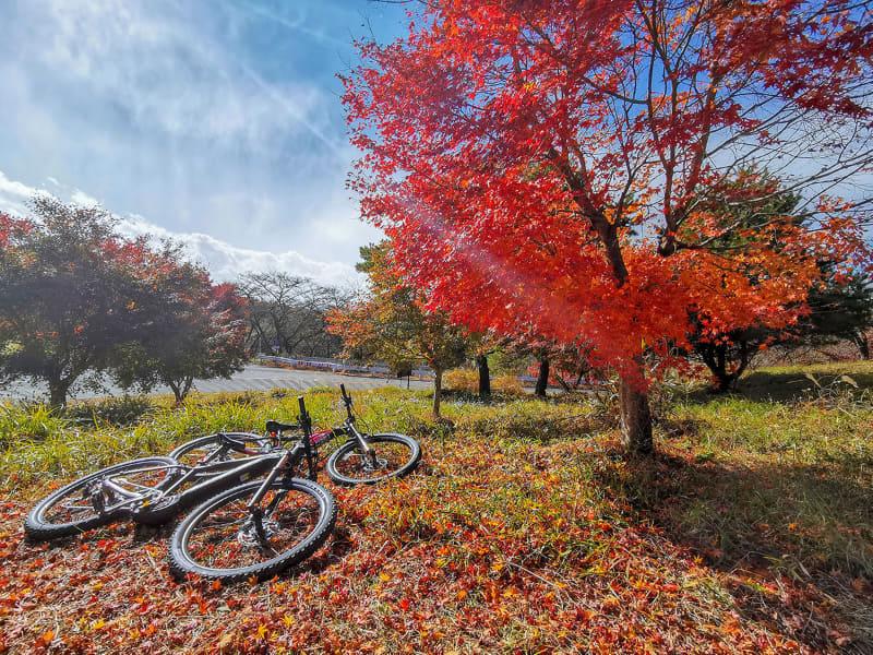 そして妄想が現実に。記念撮影! 逆光のe-bike&紅葉がエモい!