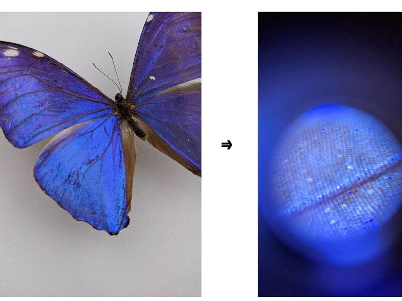 昆虫の観察のほか、人間の頭皮や肌の毛穴なども撮影可能