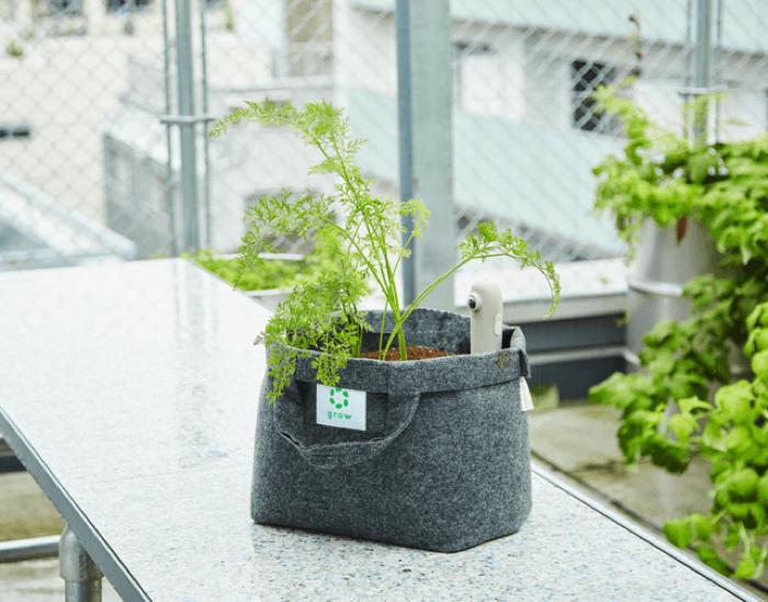 生ゴミを自然の微生物の力で堆肥に変えるコンポストでは、プランターの土を入れ替えながら、野菜栽培をずっと続けられるという