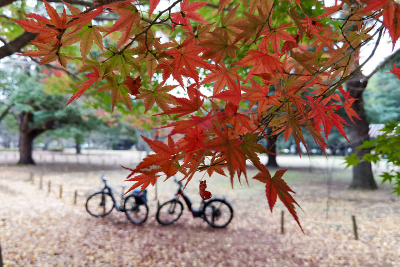 少人数×e-bikeで人混みを避けながらグルメと自然を楽しみました