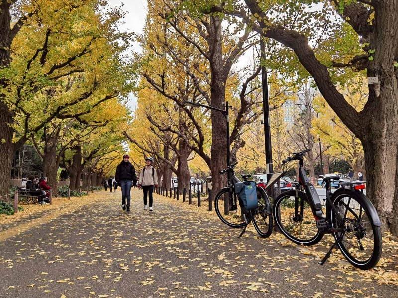 明治神宮外苑のいちょう並木。デートで来てもよさそう……!