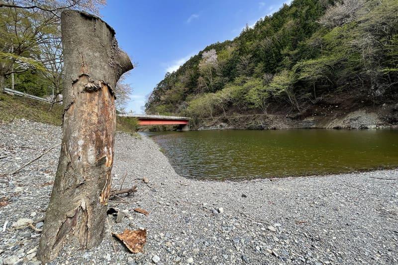 湖に注ぐ川のほとりに下りてみました。カエルがゲコゲコ言ってる!! やっぱり春ですね~