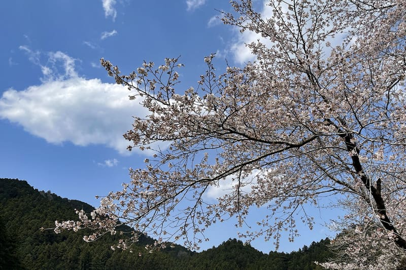 そして桜の花も♪