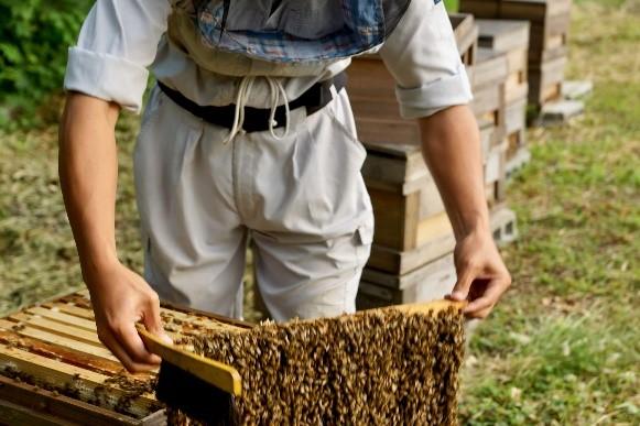 市原みつばち牧場は、養蜂による里山の再生を目的としている
