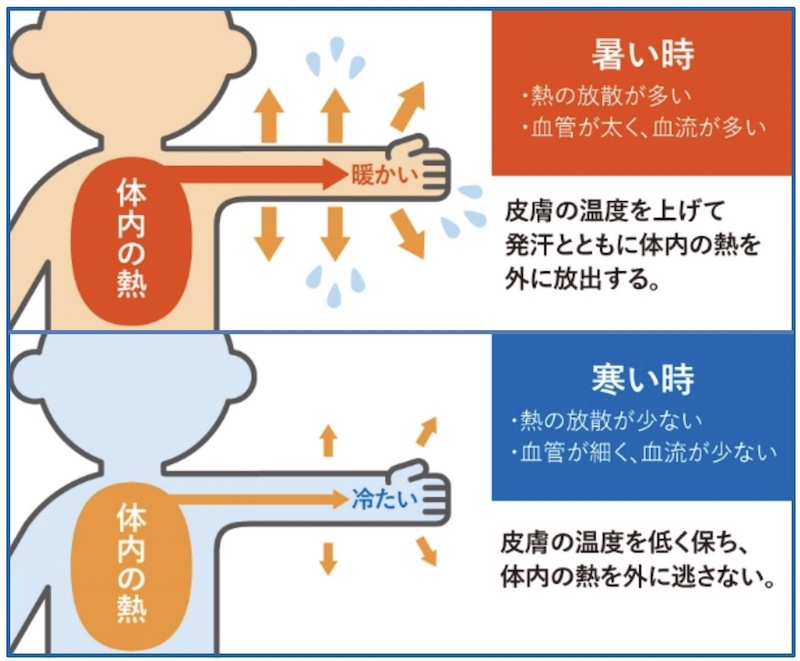 人は、体の深部の核心温を一定に保つため、環境に合わせて体温を調節する