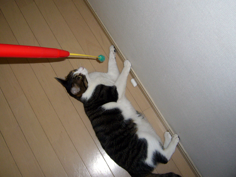床に寝転んだ猫にも、立ったままで届く