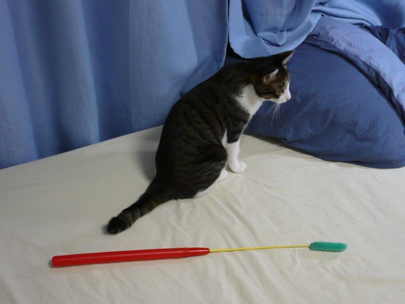 猫じゃらし産業「猫じゃらし アダプタア」